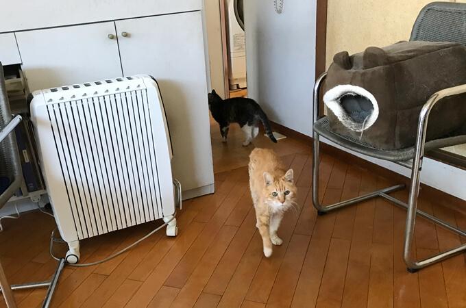 中安さんの猫