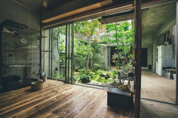 家の中から眺める中庭