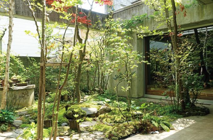 中庭に生える木々