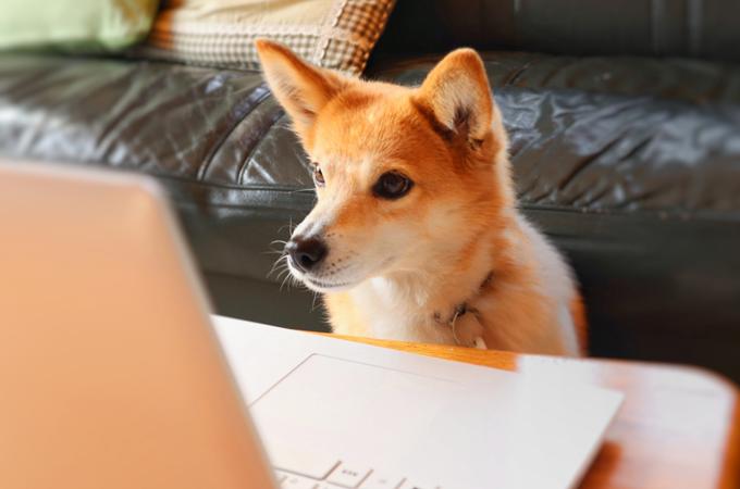 柴犬とパソコン