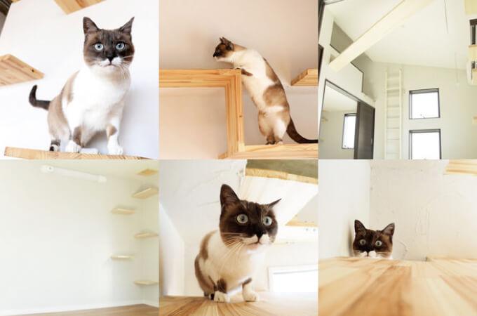 猫まみれ2