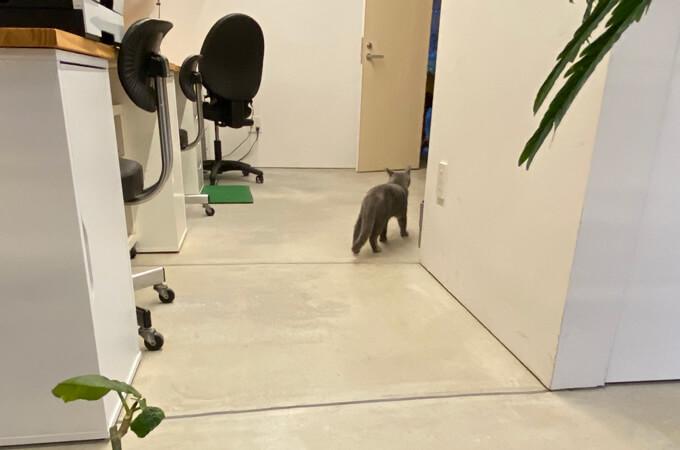 事務所を散策する猫ちゃん
