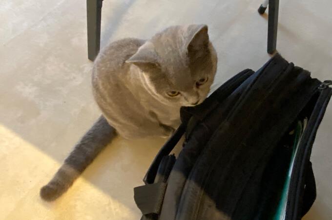 インタビュアーの鞄に興味津々の猫ちゃん