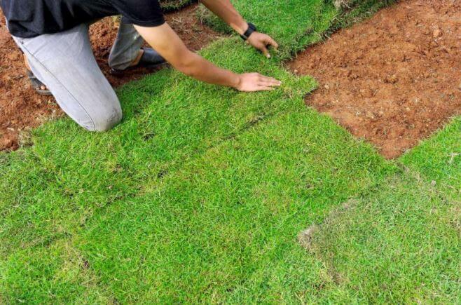 庭の芝生張りDIYの事例写真