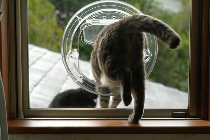 窓ガラスを通り抜けるペットドア