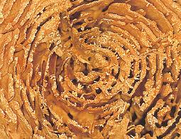 シロアリに食べられた痕跡